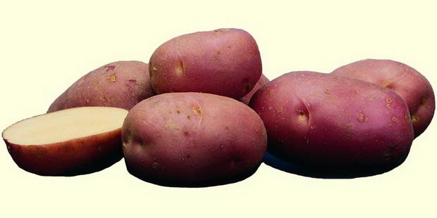 фото сорта картофеля огниво