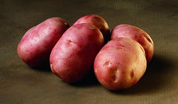 фото сорта картофеля Олева