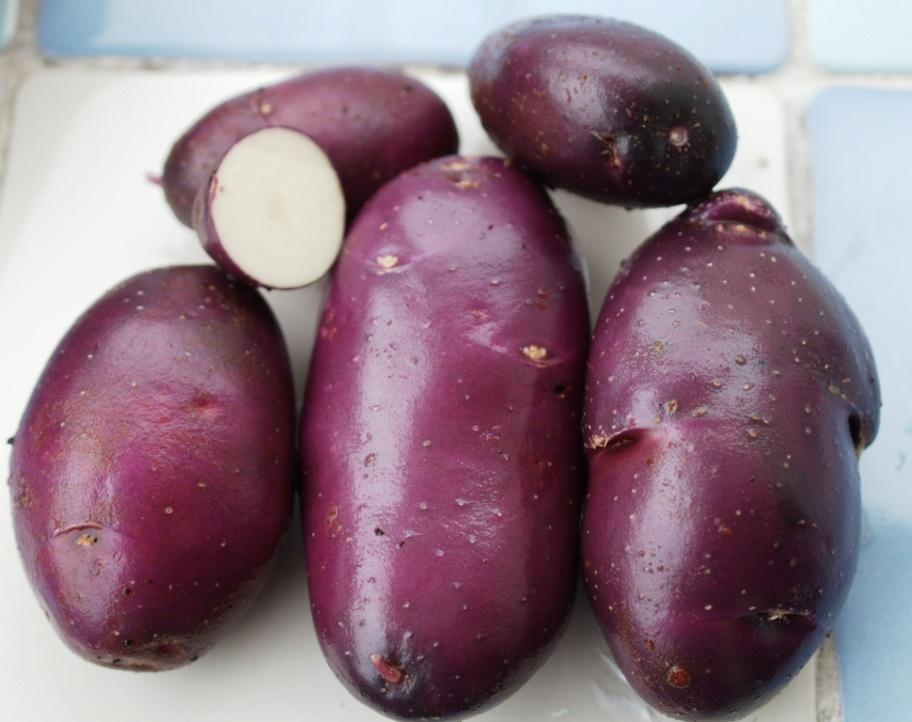 фото картофеля Голубой Дунай