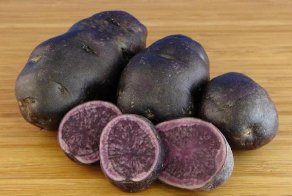 фото картофеля Adirondack Blue