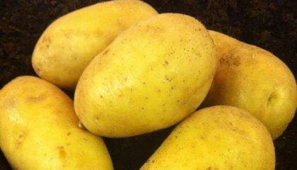 фото картошки оркестра