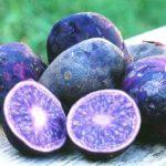 фото картошки с синей кожурой