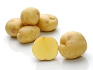фото сорта картофеля опал