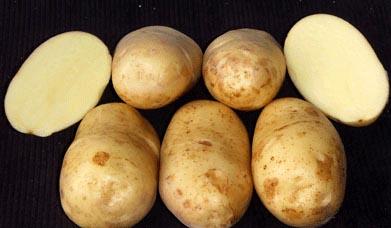 фото сорта картофеля Оредежский