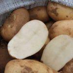 фото картошки памяти Кулакова