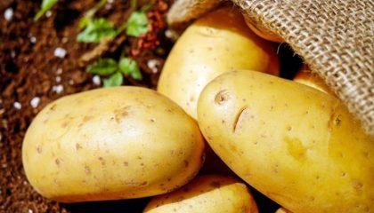 фото картошки платина