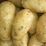 фото картошки Погарский