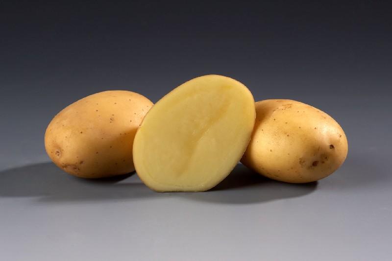 фото сорта картофеля Пиколо Стар