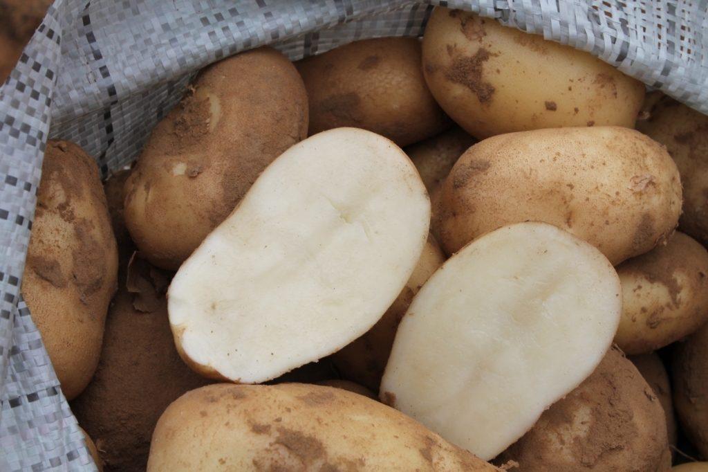 фото сорта картофеля Погарский