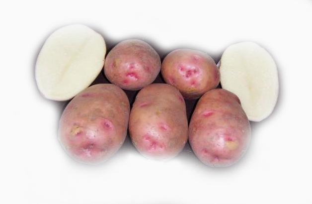 фото сорта картофеля полет