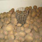что делать если подмерзла картошка