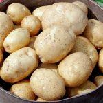 фото картошки полонез