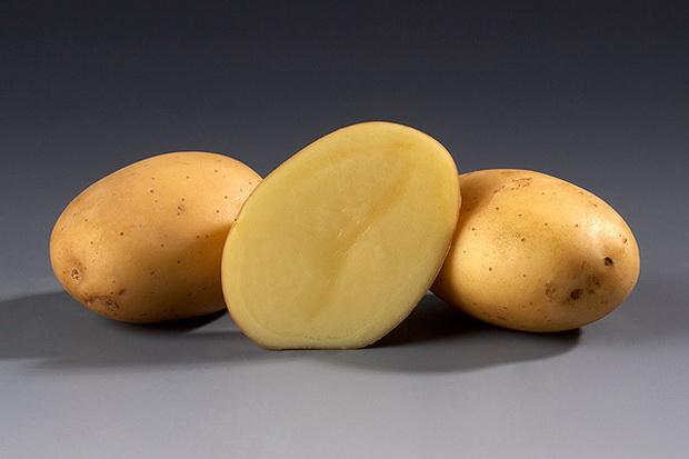 фото сорта картофеля полонез
