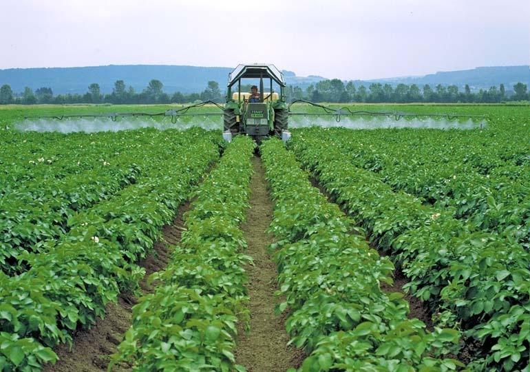 фото обработки картофеля фунгицидами