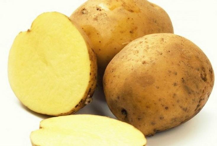 фото сорта картофеля россиянка