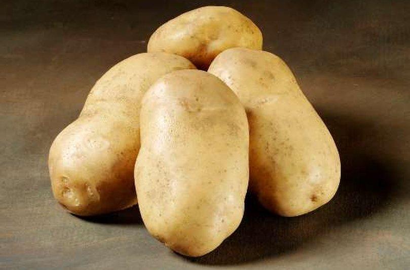 фото сорта картофеля роял