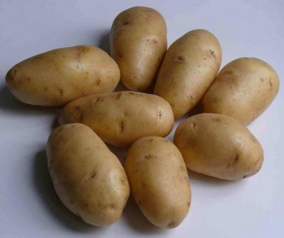 фото сорта картофеля укама