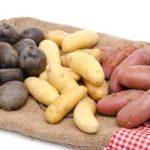 фото голландских сортов картошки