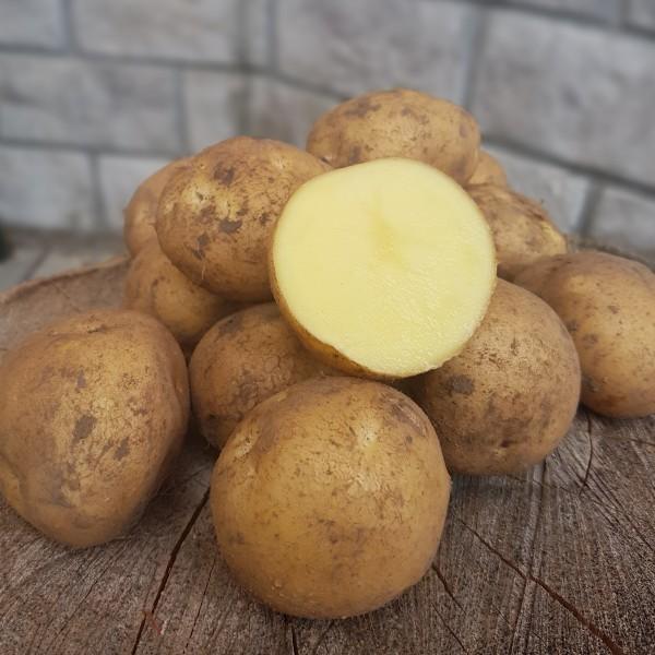 фото сорта картофеля сафо