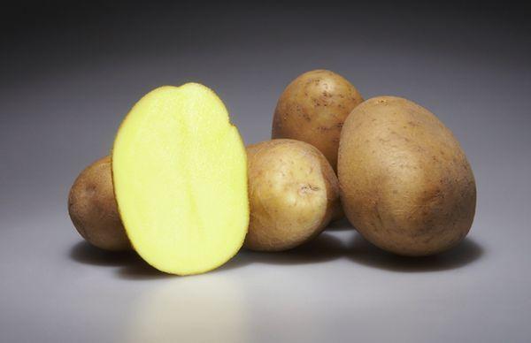 фото сорта картофеля Сандин