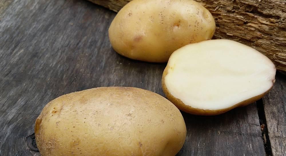 фото сорта картофеля Сафия