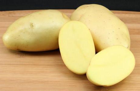 фото сорта картофеля северный