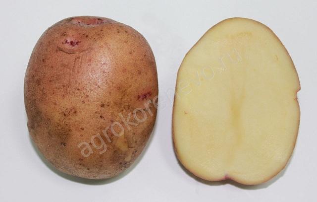 фото сорта картофеля сигнал