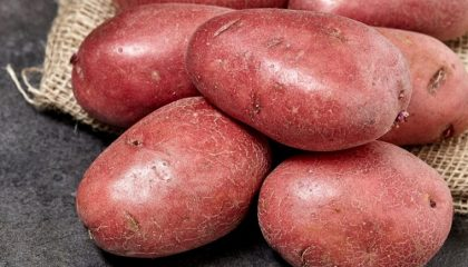 фото картофеля тулунский ранний