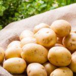 фото картофеля Солнечный