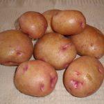 фото картошки соточка