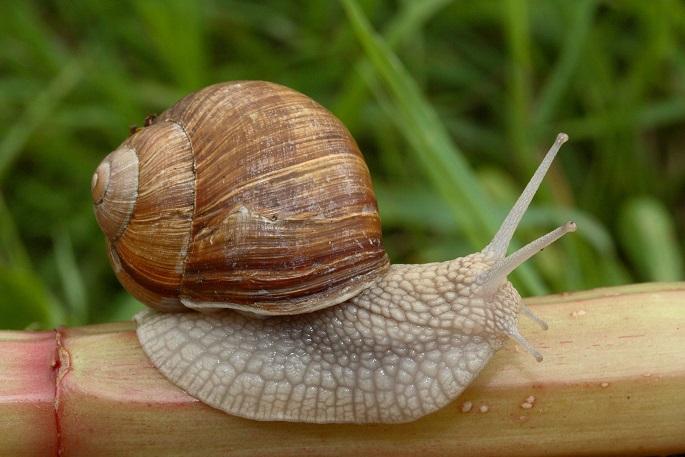 фото моллюска слизня