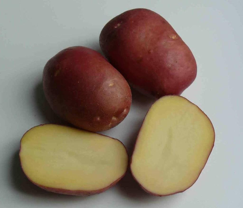 фото сорта картофеля Сокольский