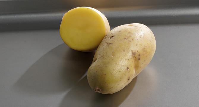 фото сорта картофеля Стемлук