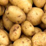 фото картошки сорта фолва