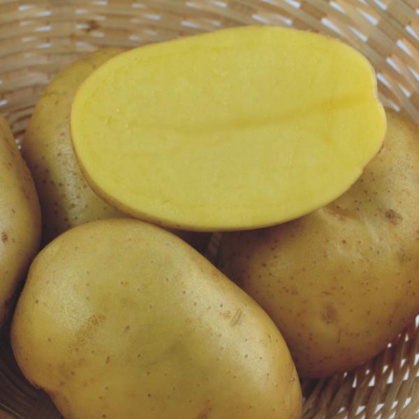 фото сорта картофеля Фиделия