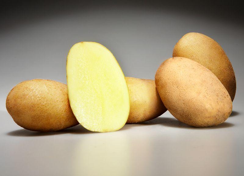 фото сорта картофеля Фиоретта