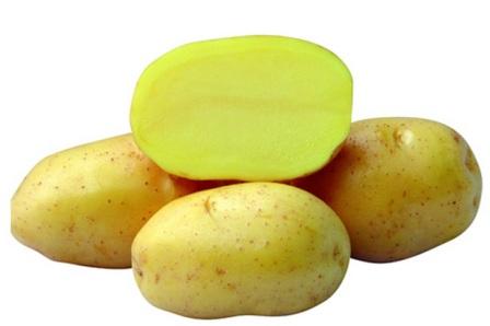 фото сорта картофеля Фокинский