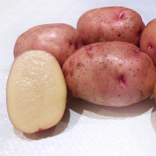 фото сорта картофеля Хибинский ранний