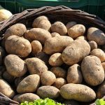 фото картошки лайонхарт