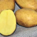 фото картошки Миа