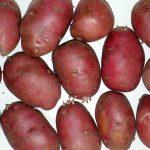 фото картошки Рикарда