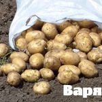 фото картошки варяг