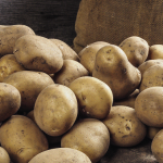 фото картошки Юна