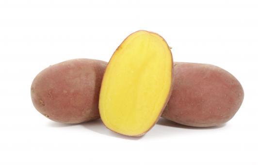 фото сорта картофеля Балтик Роуз