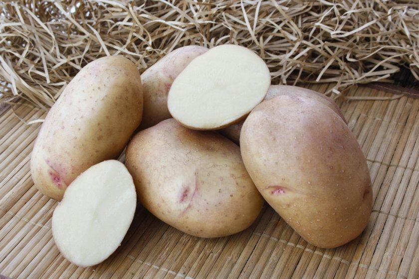 фото сорта картофеля Былина Сибири