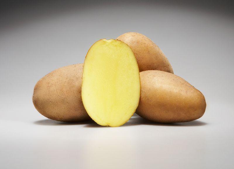 фото сорта картофеля Эстрелла
