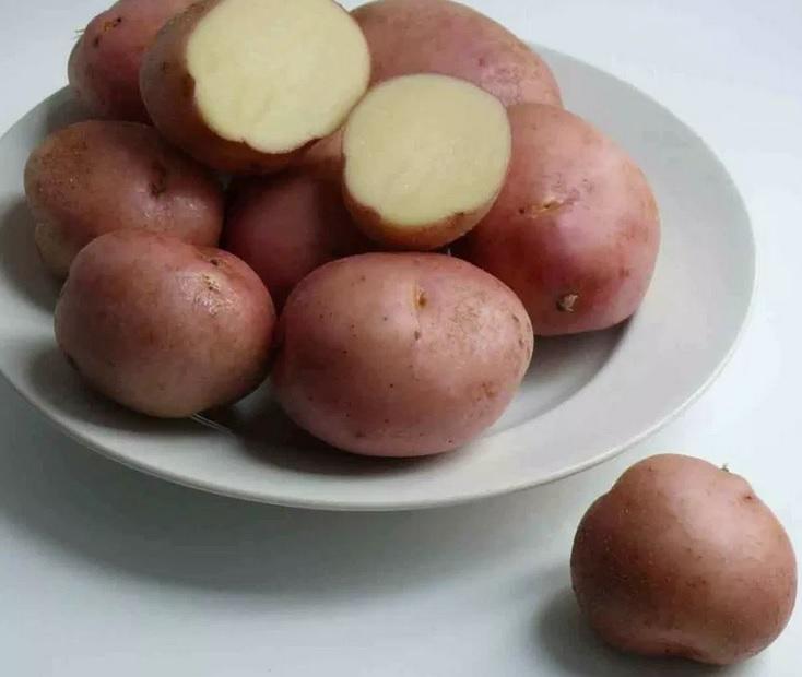 фото сорта картофеля Холмогорский