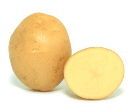 фото сорта картофеля Хузар