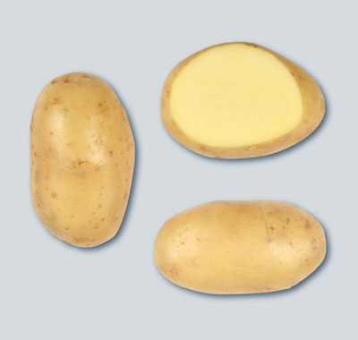 фото сорта картофеля Колымский