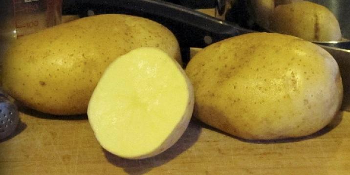 фото сорта картофеля Миа